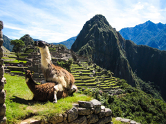 I was browsing the web for Machu Picchu wallpapers when suddenly