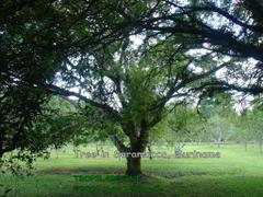 Image Amazon Rainforest