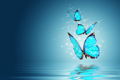 mood butterfly magic backgrounds blue wallpapers widescreen full