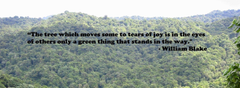 International Day of Forests Quotes 2017 World Forestry Day Slogan