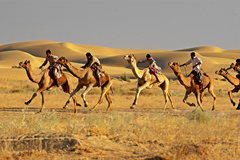 Golden Triangle Tour with Desert Festival Jaisalmer Indian Golden