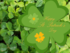 St Patrick Day Wallpapers by Kate