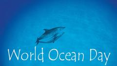 World Ocean Day Dolphins Love Ocean Wallpapers