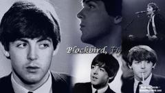Paul McCartney Wallpapers I by beeeatle