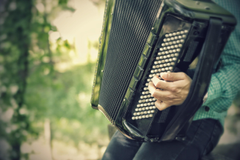 stock photo of accordion classical harmonica