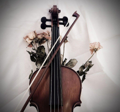 Viola Wallpapers Collection of Viola Backgrounds Viola High
