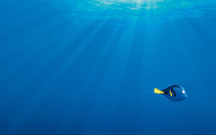 Finding Dory HD Wallpapers