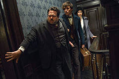 Wallpapers Fantastic Beasts And Where To Find Them Eddie Redmayne