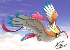 Photo Collection Mega Pidgeot Basic Wallpapers