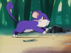 Crazy Pokémon Go glitch is turning Pokeballs into Rattatas OtakuKart