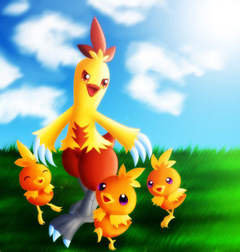 combusken and torchic by GNTS