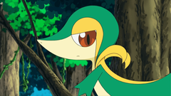BW007 Snivy Plays Hard to Catch