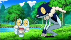 Frogadier Shiny Anime