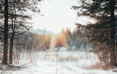 Wallpapers forest trees nature sunset winter mountains snow landscapes edge sunlight branches sun glare blur effect 4k ultra hd backgrounds image for desktop section