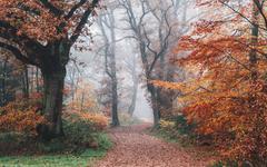 Autumn 4K Wallpaper Forest Fall Foliage Trees Foggy Morning 5K 8K Nature