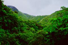 Engaging Rainforest Photos