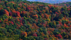 MLeWallpapers Appalachian Mountains In Fall Desktop Backgrounds