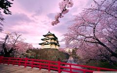 Cherry Blossoms Japan 4K HD Desktop Wallpapers for 4K Ultra HD TV