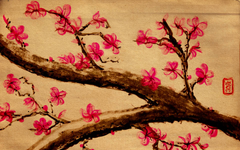 Japanese Cherry Blossoms Wallpapers