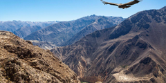 The Colca Canyon World s Largest Canyon World for Travel