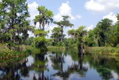 Exploring Everglades National Park