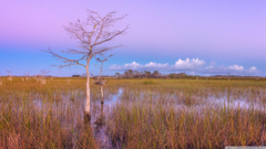 Pink Sunset Wetlands Everglades National Park 4K HD Desktop