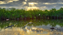 Best HD Everglades National Park Wallpapers