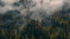 Foggy Forest Hill Wallpapers
