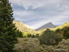 Desert Survivor Hike to Baker Lake in Great Basin National Park