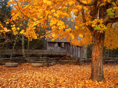 John Cable Mill Cades Cove Great Smoky Mountains National Park