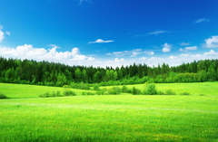 Wallpapers Green grass Thick forest Blue sky Nature