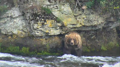 I m watching on explore streaming live from Katmai