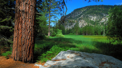 Zumwalt Meadow Trail Sequoia and Kings Canyon National Parks