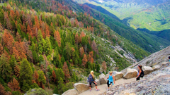 Fall Pictures View Image of Sequoia and Kings Canyon National Parks