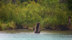 Animal Pictures View Image of Lake Clark National Park and Preserve