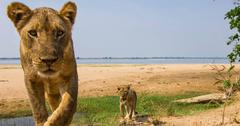 Lower Zambezi National Park Voyazed