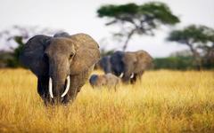 Mobile Safari Complete Lower Zambezi 8 days lodging only