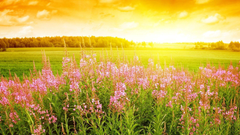 Meadow HD Wallpapers for BsnSCB