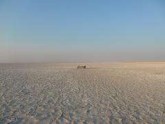 Central Kalahari Nxai Makgadikgadi Pans Botswana