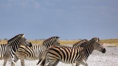 Book Makgadikgadi safaris holidays 2019 2020