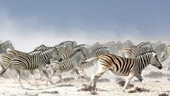 Safari Game Drive in Nxai Pan National Park
