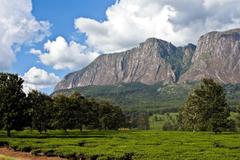 Climbing the legendary Mulanje Mountain