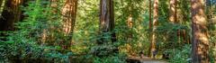 Northern California Redwoods Map Printable Muir Woods National