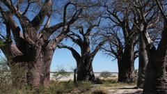 Nxai Pan in Nxai Pan National Park Botswana