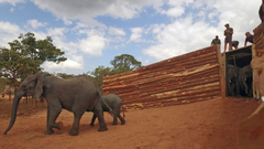 Central African Wilderness Safaris Travel Safaris and Holidays in