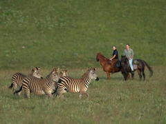 Horse riding in Nyika National Park