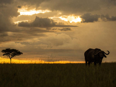 Mara Nyika Great Plains Conservation