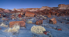 Jasper Forest in the Petrified Forest National Park USA Wallpapers