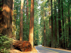 California s Redwood Forest Growing up we would vacation in