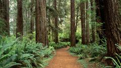 Prairie Creek Redwoods State Park near Crescent City Ca Two